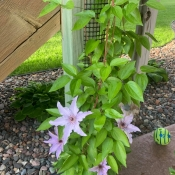 9 Foot Tall Trellis for Narrow Spaces